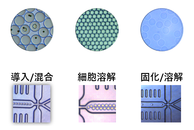 ドロップレット 細胞溶解 2液混合 ゲル化