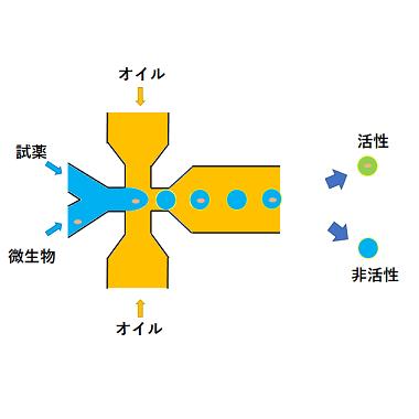 微生物ドロップレット培養スクリーニング