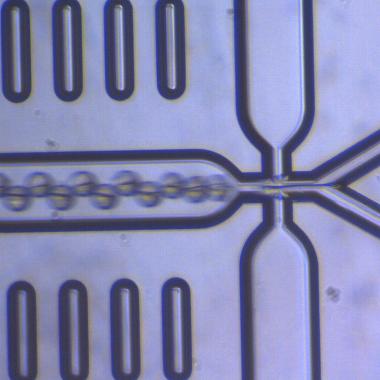 マイクロ流体チップを用いたヤヌス粒子作製