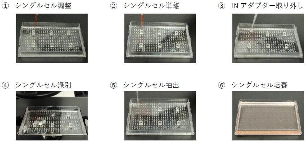 シングルセル単離 シングルセルクローニング プロセス