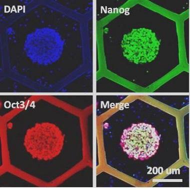 オルガノイド培養チップシステム MFOCSシリーズ